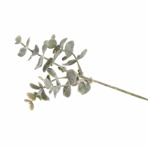 Buchszweig geeist, 20 cm